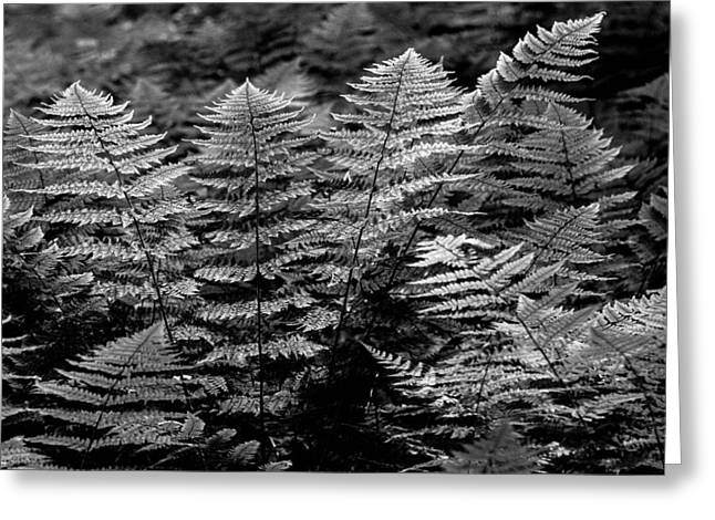 Greeting Card featuring the  Forest Of Ferns by Haren Images- Kriss Haren