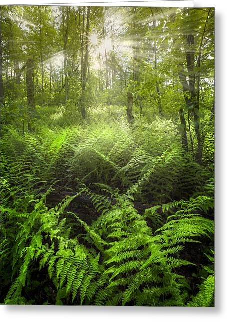Forest Of Light Greeting Card by Debra and Dave Vanderlaan