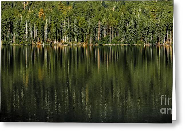 Forest Of Reflection Greeting Card by Mitch Shindelbower