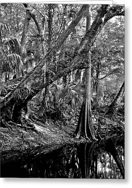 Forest On The Econ River Greeting Card