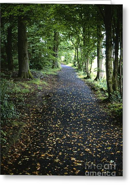 Forest Path Greeting Card by Chris Selby