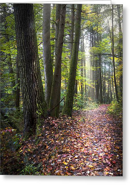 Forest Path Greeting Card by Debra and Dave Vanderlaan