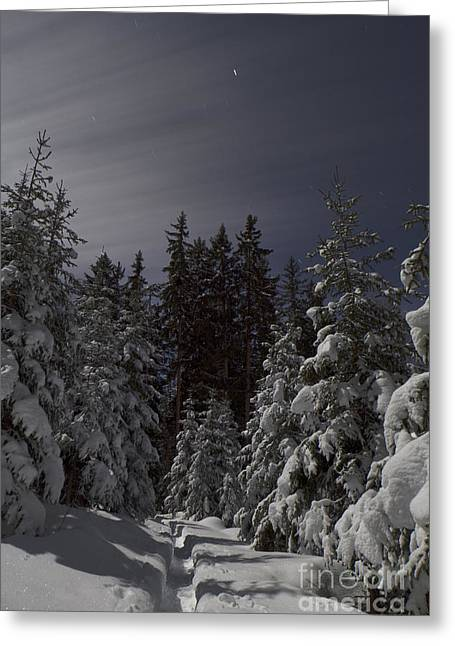Forest Path Greeting Card by Maurizio Bacciarini