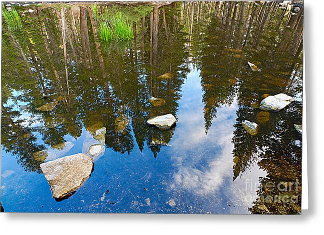Forest Reflection Greeting Card by Jamie Pham