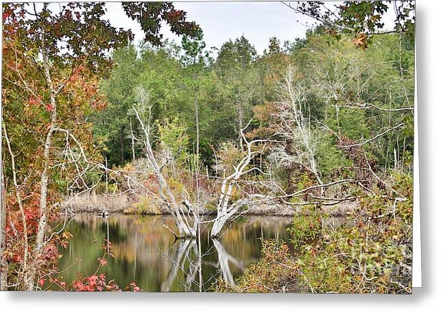 Forest Reflection Greeting Card by Mina Isaac