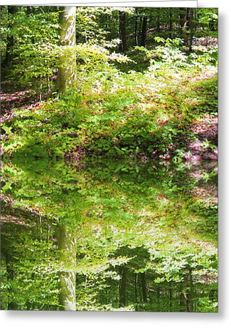 Greeting Card featuring the photograph Forest Reflections by John Stuart Webbstock