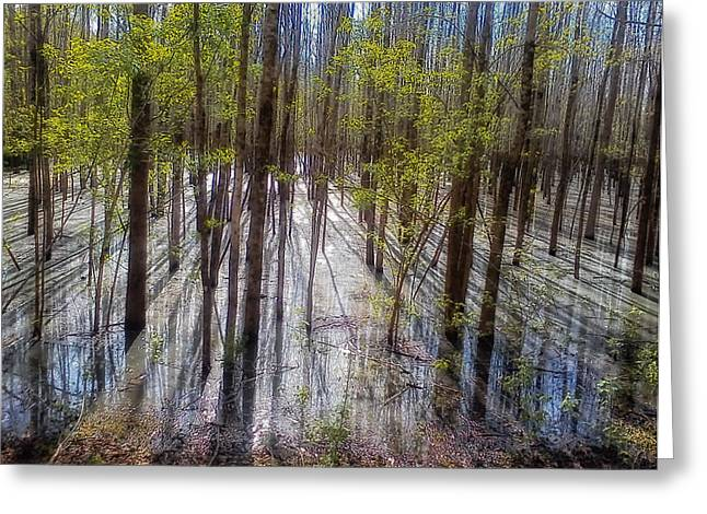 Forest Reflections Greeting Card