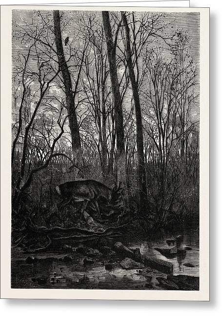 Forest Scene In Spring Greeting Card by English School