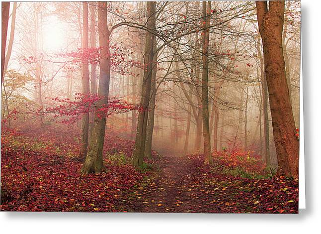 Forest Scene. Greeting Card by Leif L??ndal