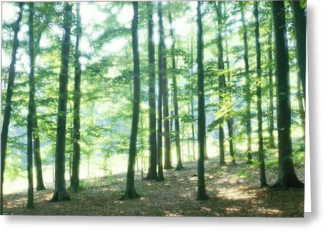 Forest Scene With Fog, Odenwald Greeting Card