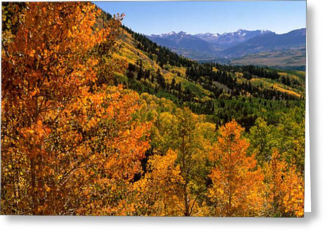 Forest, Silverton, San Juan County Greeting Card by Panoramic Images