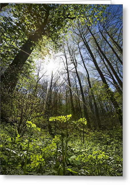 Forest Star Greeting Card by Debra and Dave Vanderlaan