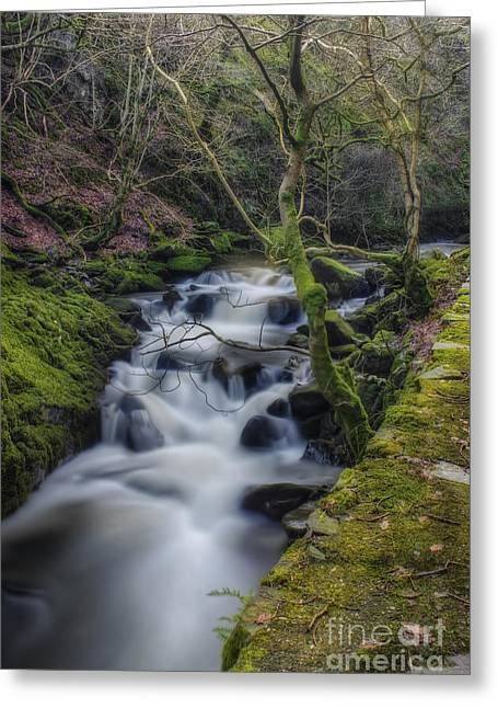 Forest Stream Greeting Card by Ian Mitchell