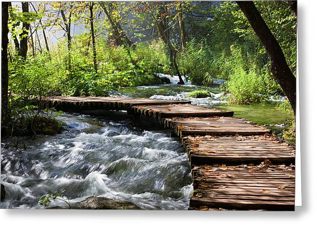 Forest Stream Scenery Greeting Card