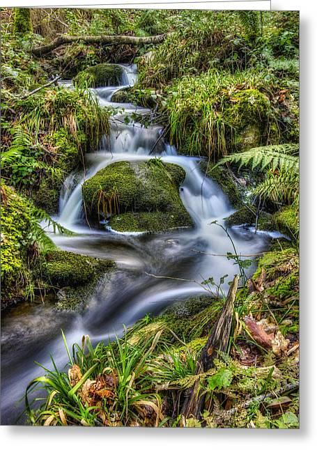 Forest Stream V2 Greeting Card