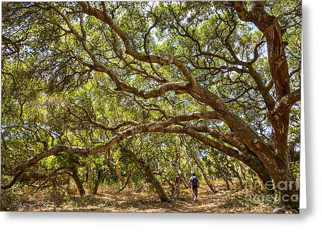 Forest Stroll - The Magical And Mysterious Trees Of The Los Osos Oak Reserve. Greeting Card by Jamie Pham