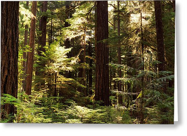 Forest Sunlight Greeting Card by Leland D Howard