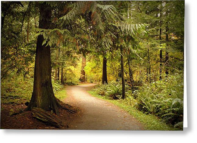 Forest Trail Greeting Card by Brian Chase