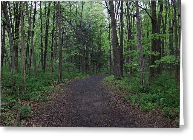Forest Trail Greeting Card by Catherine Gagne