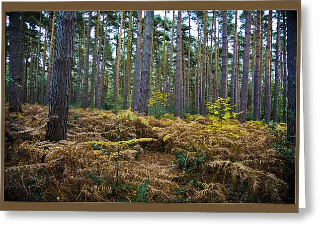 Greeting Card featuring the photograph Forest Trees by Maj Seda