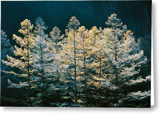 Forest Trees With Sunlight At Sunrise Greeting Card by Panoramic Images