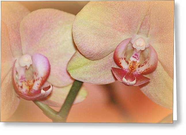 Greeting Card featuring the photograph Forever Orchids by The Art Of Marilyn Ridoutt-Greene