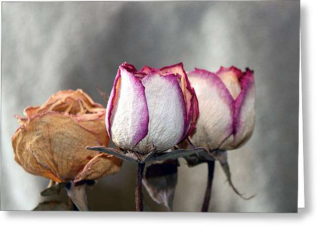 Greeting Card featuring the photograph Forever Roses by Penny Hunt