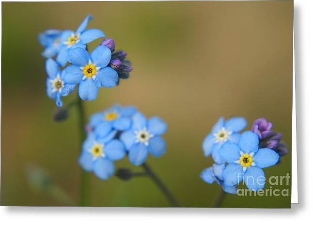 Forget Me Not 01 - S01r Greeting Card