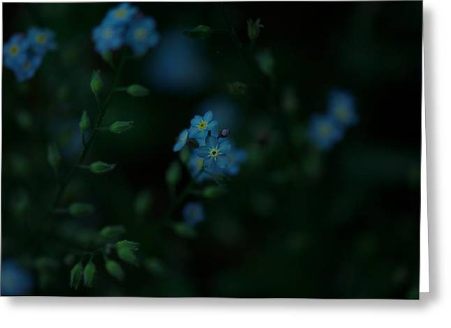 Forget Me Not 5 Greeting Card