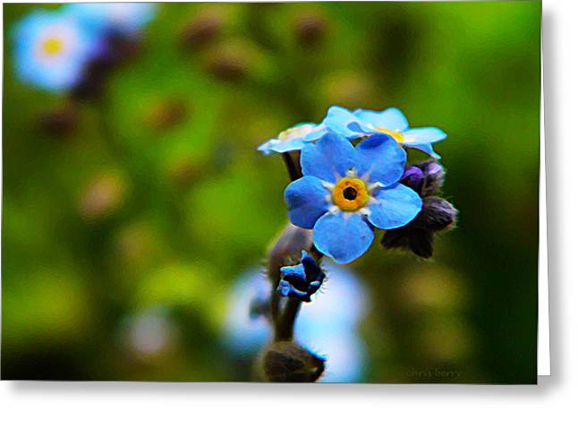 Forget Me Not Bloom Greeting Card by Chris Berry