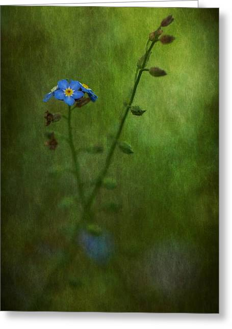Forget Me Not Light Space Time Botanicals Art Exhibition 2014 Special Merit Award Greeting Card