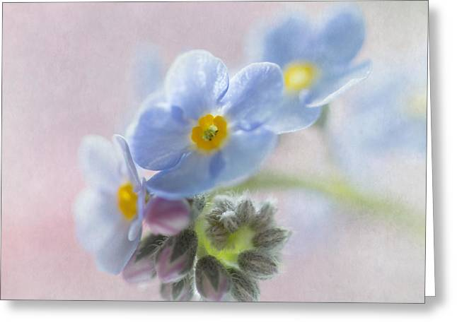 Forget Me Not Square Greeting Card by Angie Vogel
