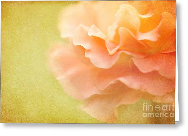 Forgiveness Greeting Card by Beve Brown-Clark Photography