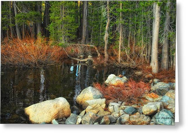 Forgotten Forest Greeting Card by Donna Blackhall