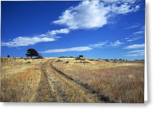 Forgotten Road Greeting Card by Julie Magers Soulen