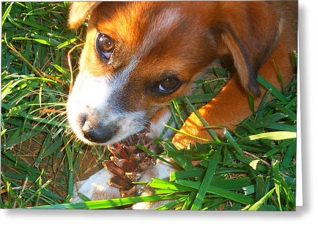 Forrest And His Pinecone Greeting Card by Andrew Martin
