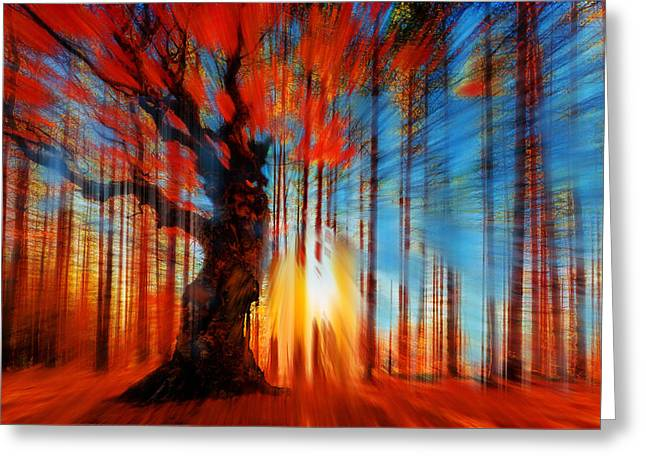 Forrest And Light Large Greeting Card