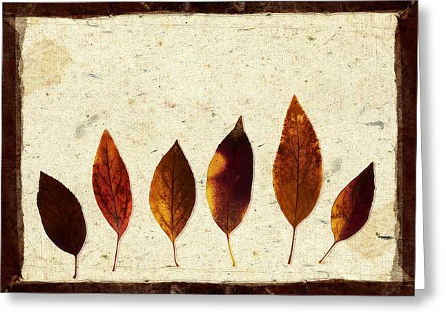 Forsythia Leaves In Fall Greeting Card by Carol Leigh