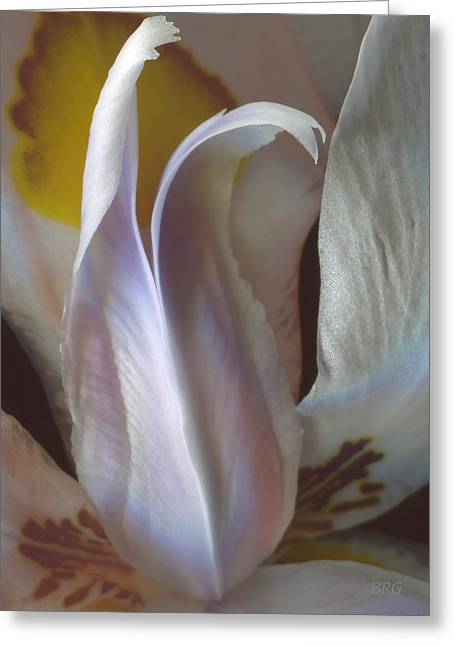 Fortnight Lily Composition No 3 Greeting Card by Ben and Raisa Gertsberg