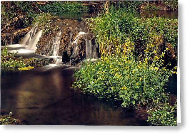 Fossil Creek Greeting Card by Leland D Howard