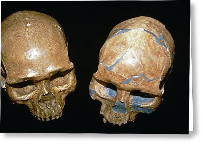 Fossil Homo Sapiens Skulls Greeting Card