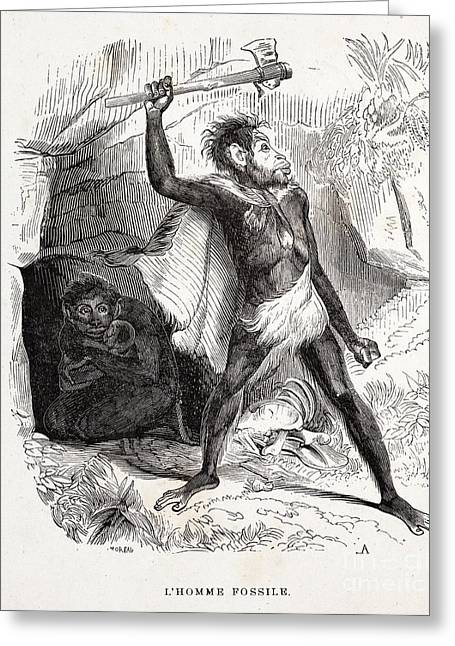 Fossil Man By Boitard, 1861 Greeting Card by Paul D. Stewart
