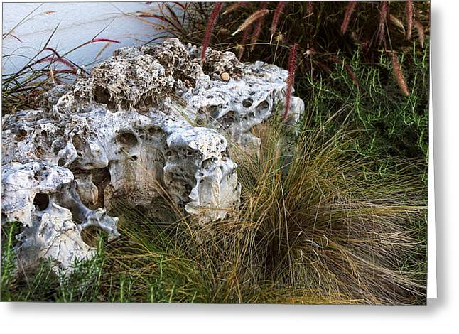 Fossil Rock Greeting Card by Linda Phelps
