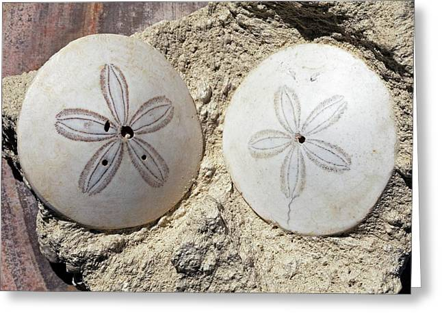 Fossil Tests Of Scutella Greeting Card by Dirk Wiersma