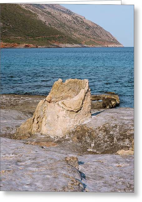 Fossil Tree Stump Greeting Card by David Parker
