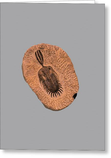 Fossil Trilobite Greeting Card