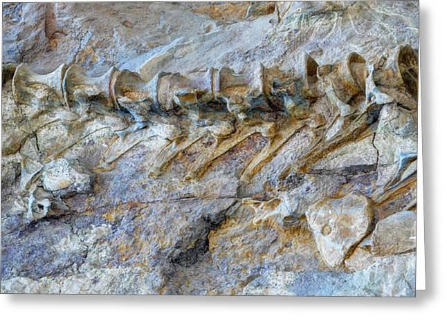 Fossilized Dinosaur Backbone - Dinosaur National National Monument Greeting Card