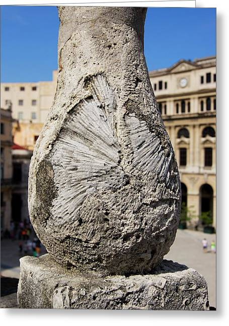 Fossils In Cuban Balustrade. Greeting Card