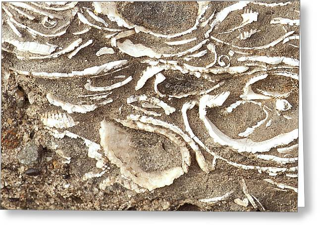 Greeting Card featuring the photograph Fossils Layered In Sand And Rock by Artist and Photographer Laura Wrede