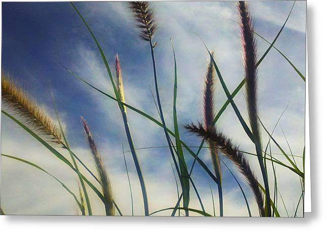 Greeting Card featuring the photograph Fountain Grass by Richard Stephen